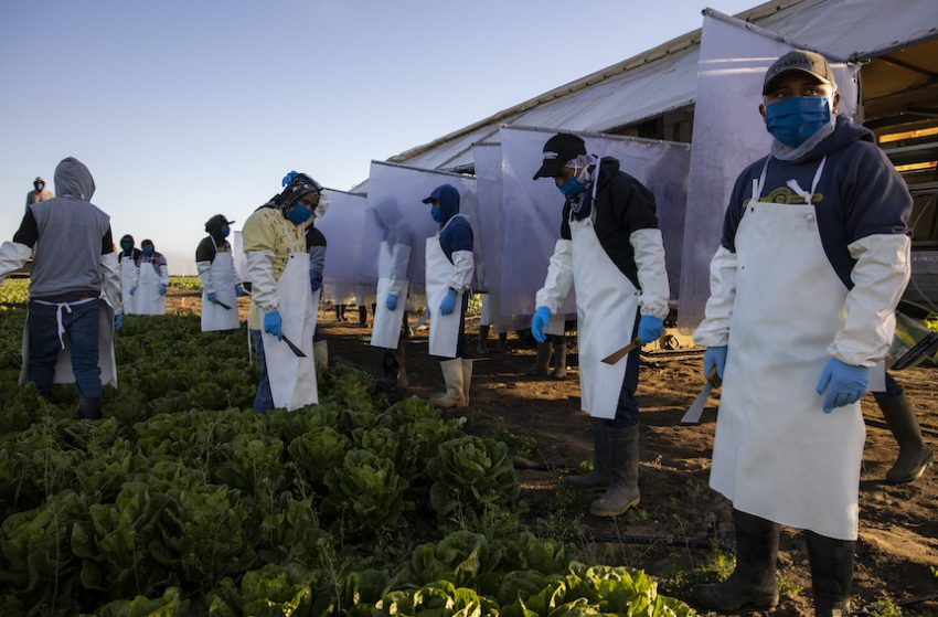 Migrant farmworkers in Greenfield, Calif., where Fresh Harvest has been implementing safety precautions to protect against Covid-19 infections. (Brent Stirton/Getty Images)